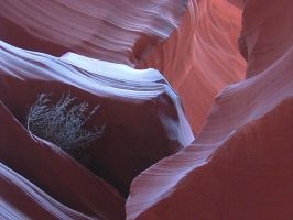 Antelope Canyon with Plant by PatGoltz