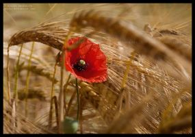 beauty is hidden in the fields by morho
