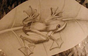 My Tree Frog by Confused4