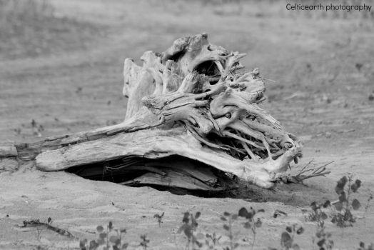 Driftwood BW by CelticEarth
