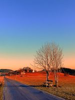 Country road, trees, a bench and a sundown by patrickjobst