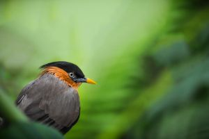 Jungle shy bird by ludovicjamet