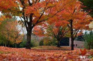 Fall Trees by RoadKillConcepts