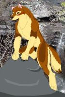 Lupey on a rock by Wolfbird