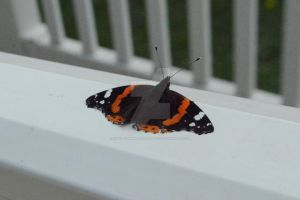 Butterfly On My Caravan by KayleighBPhotography