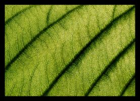 Green by Etherick