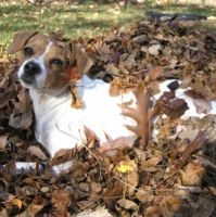 Coco in the leaf pile by ponygirl0316