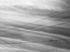 Lines of this world by unattentive