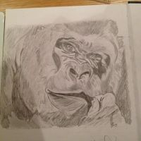 Gorilla chewing a straw by straughany