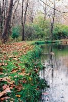 Sugarcreek Metro Parks F100 Ektar 17 by PLutonius