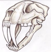 Sabertooth Skull by filly4585