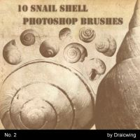 snail shell brushes 2 by Draicwing