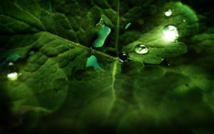 rain has gone   wallpaper by denkyo