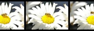 Daisy Bee by vetala