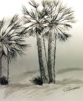 Palm trees by Nohbudy