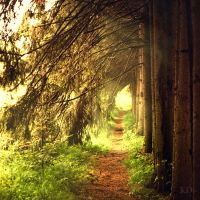 magic pathway. by Altingfest