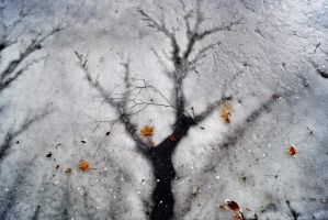 Icy Tree by AmandaLPomante