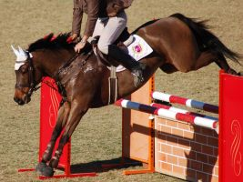Showjumping stock by Chunga-Stock