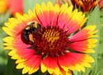 Bee With Pollen by boogster11