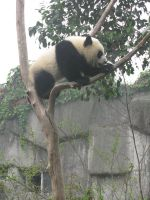 Steady Panda by Artsee1