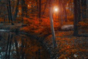 enchanted forest scene I. by ildiko-neer