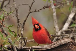 Doing Cardinal Things by robbobert