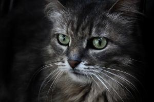 Serious Cat by Arina1
