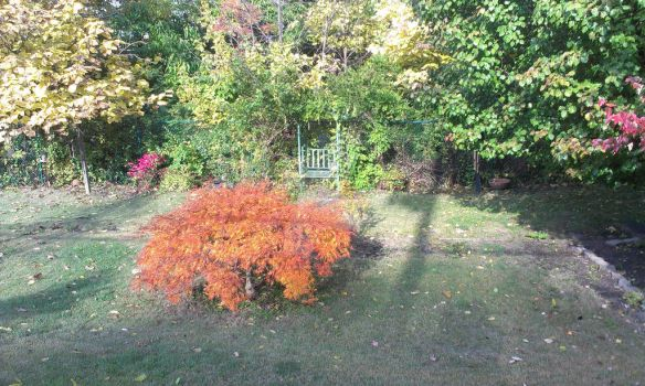 Autumn Yard by TheRealBlackout