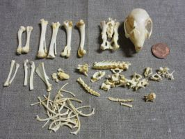 Rabbit Skeleton FOR SALE!!! by TheNewCoyote