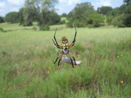 Banana Spider by Useless--Fox