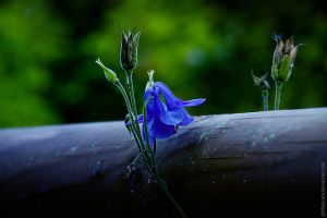 Growing over.... by MDelicata
