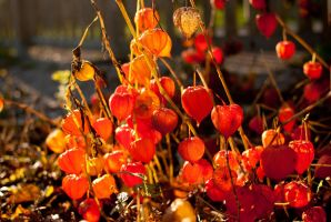Fireworks of autum 6 by macgl