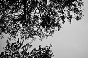 branches by ANDMAiYESi1986