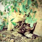 kittens. by hystericalemotion