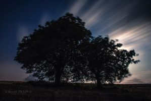 Two Trees 23h49 by roon1305