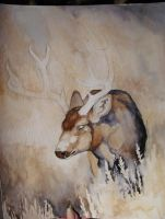 WIP Deer Watercolor Painting by MorRokko