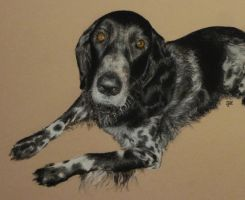 Tess in pastel by SteveHargreaves