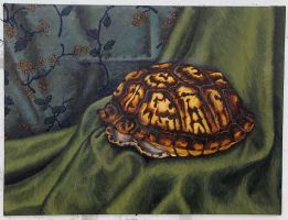 Empty Turtle Still Life by whether-girl