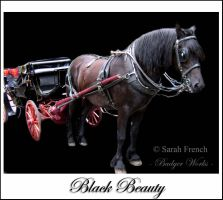 Black Beauty by Silverbadger