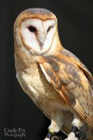 Barn Owl by lost-nomad07