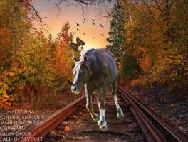 Will Lead To Somewhere by EnchantedEquine