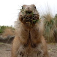 Prairie dog by MedeaMelana
