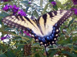 Pretty Yellow Butterfly by Kitty1297
