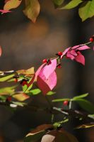 Pink Berry by calger459