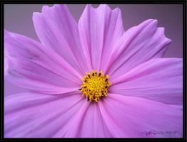 COSMOS 2 by BELLESYMPHORINE