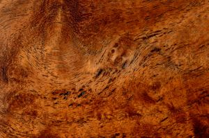 Mesquite Texture 3 by lamorth-the-seeker