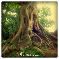The Roots 03 by MarcoPhotos