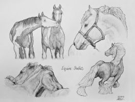 Equine studies I by TamarViewStudio