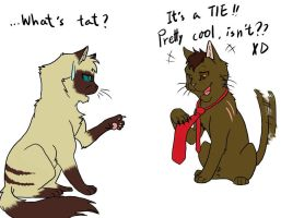 What's tat? by CYcat
