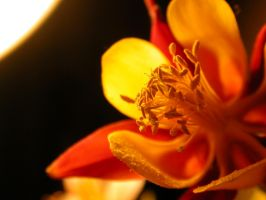 flower 05 by tiffgraphic